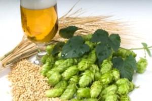 barley_beer_web